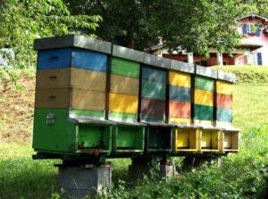 Agricoltura sociale - api