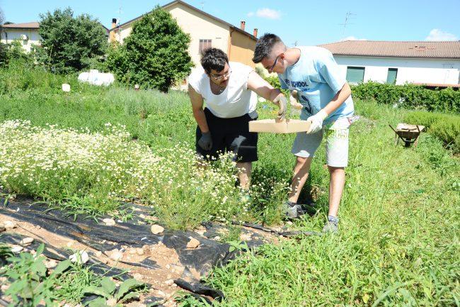 Agricoltura Sociale – Di Chi Sono Le Mani Donate All'agricoltura?